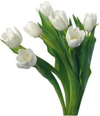 flowers 174