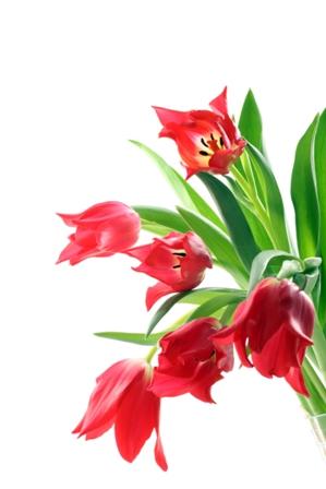 flowers 181