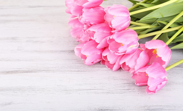 flowers 182