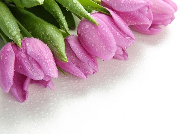 flowers 183