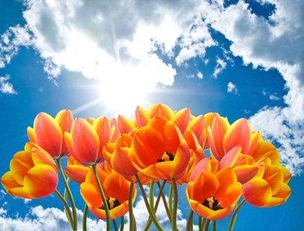 flowers 186