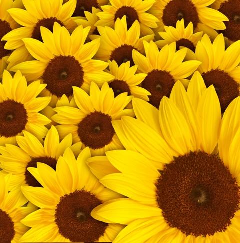 flowers 193.JPG