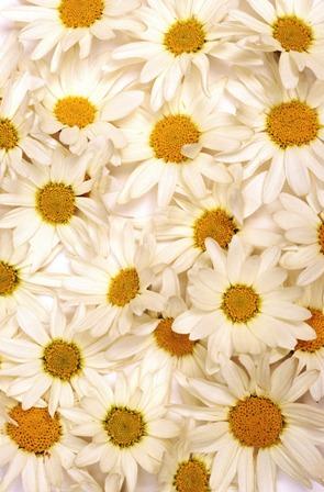 flowers 194