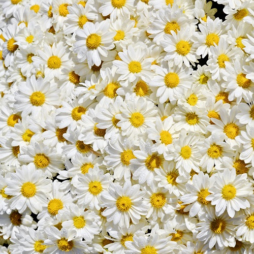 flowers 196