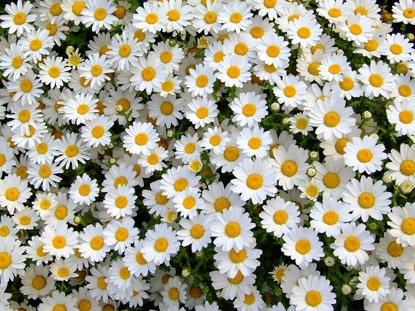 flowers 197