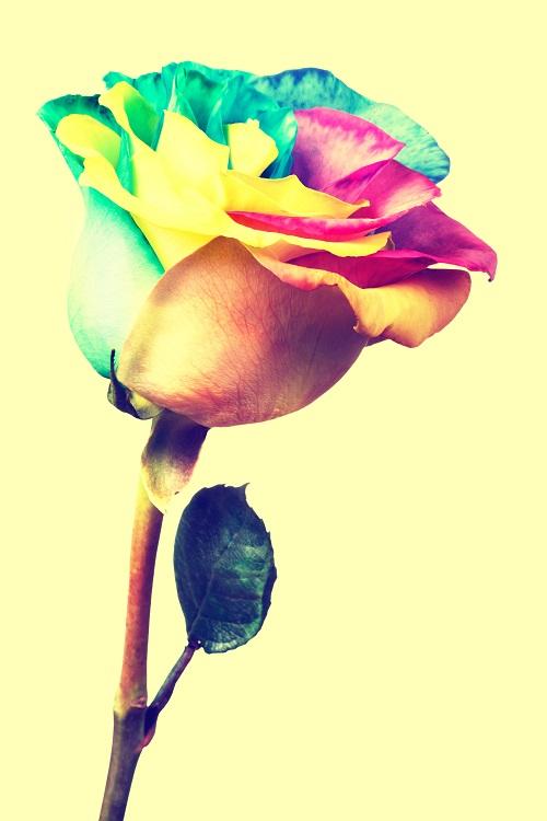 flowers 200