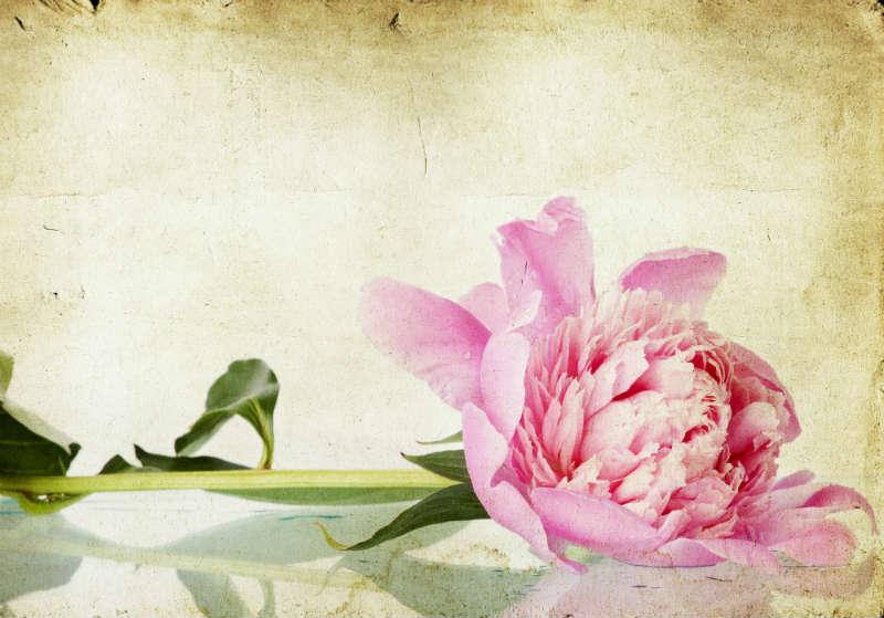 flowers 204