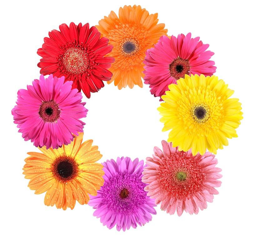 flowers 208