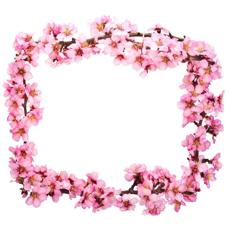 flowers 210