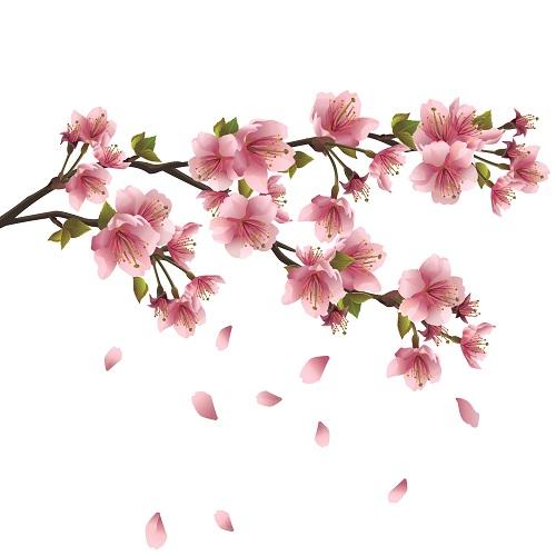 flowers 228