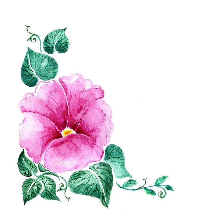flowers 229