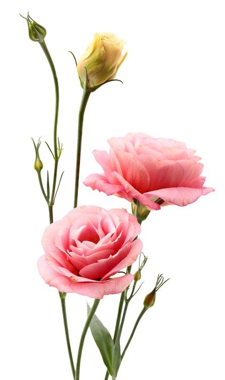 flowers 234