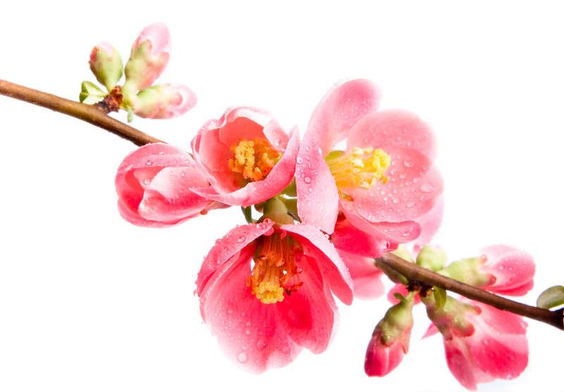 flowers 236