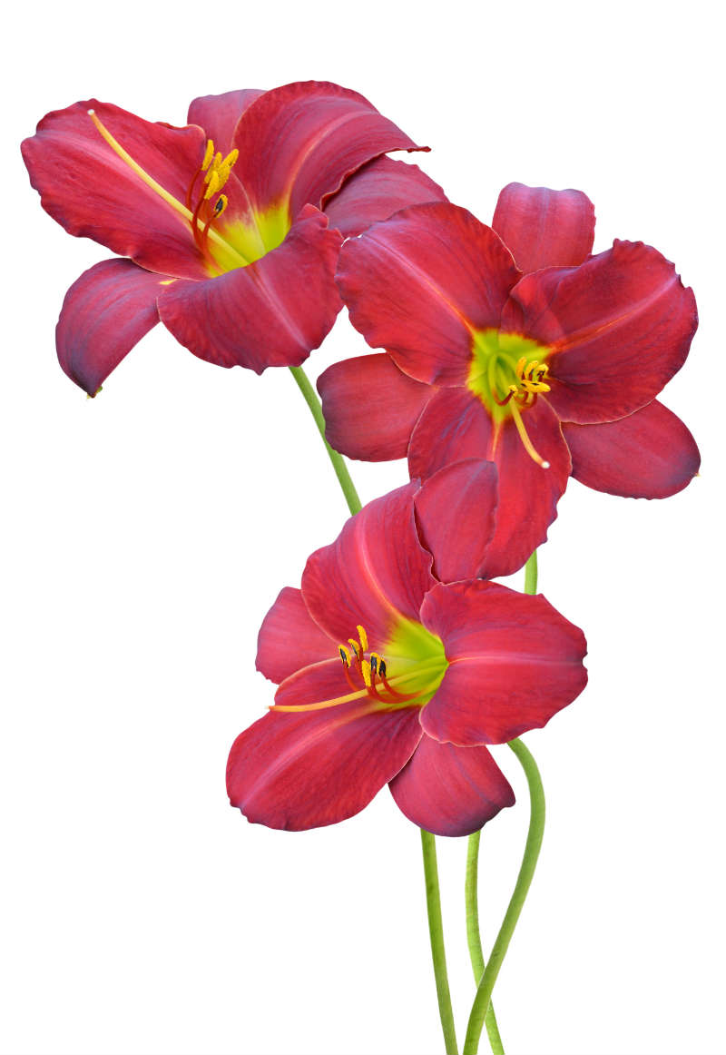 flowers 237