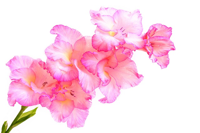 flowers 242