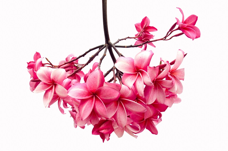 flowers 243