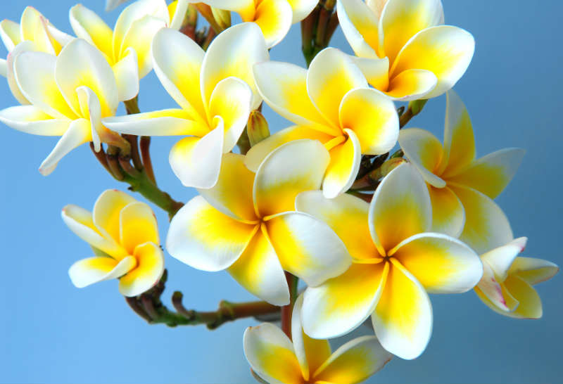 flowers 249
