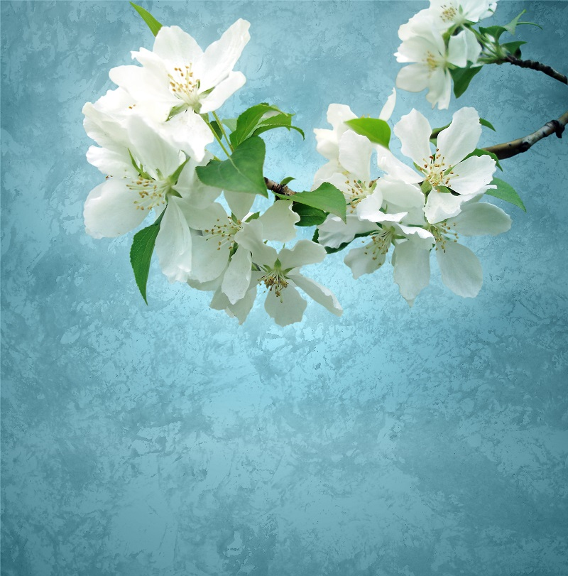 flowers 250