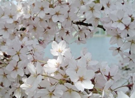 flowers 251