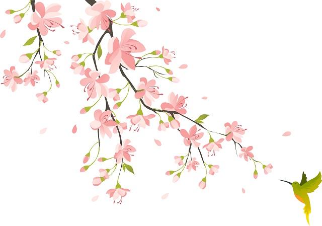 flowers 257
