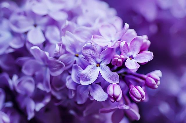 flowers 265