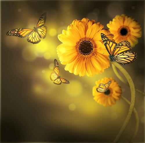 flowers 266