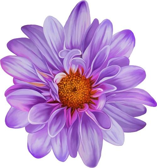 flowers 267