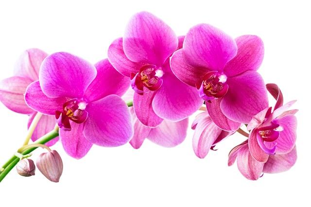 flowers 270