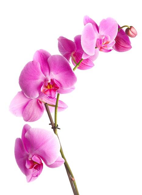 flowers 281