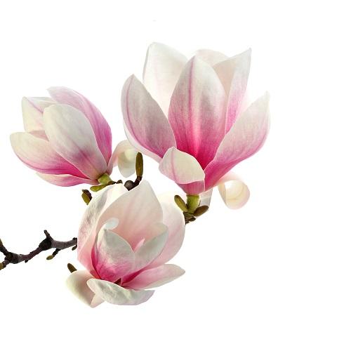 flowers 289