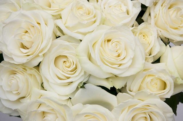 flowers 291