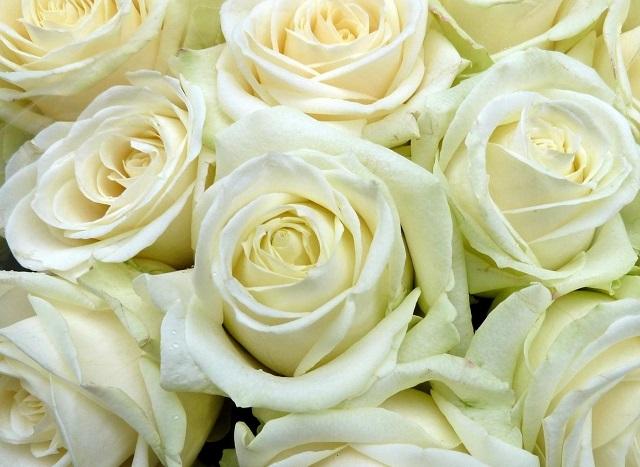 flowers 295