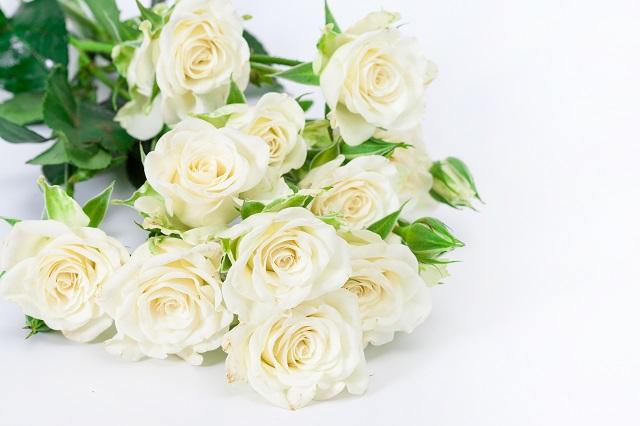 flowers 296