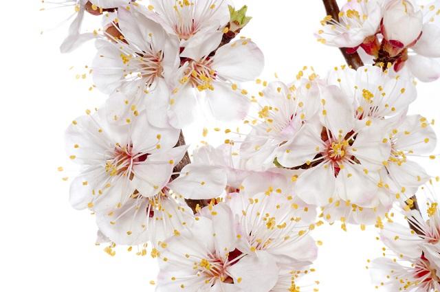 flowers 297