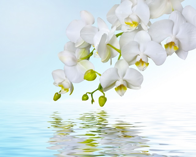 flowers 299