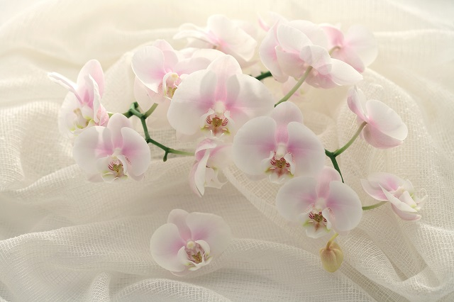 flowers 301