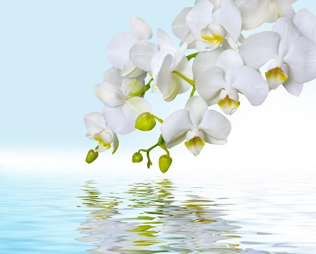 flowers 305