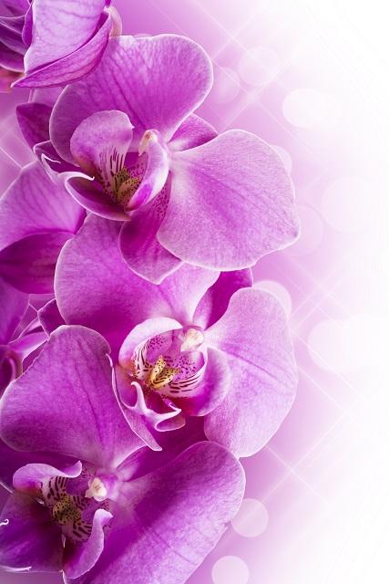 flowers 308
