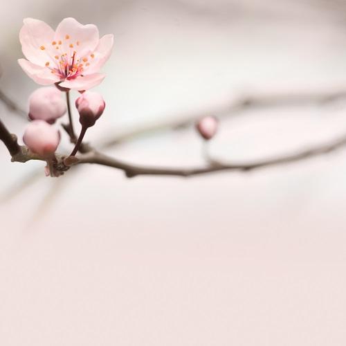 flowers 310