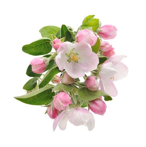 flowers 312