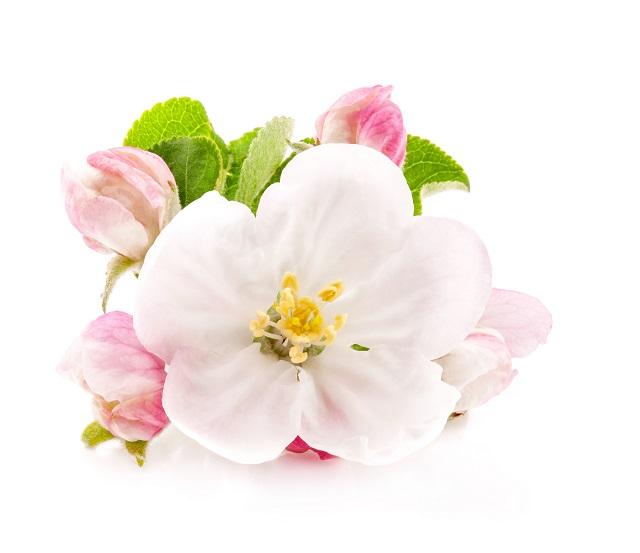 flowers 314