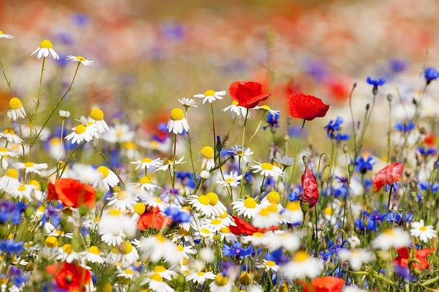 flowers 317