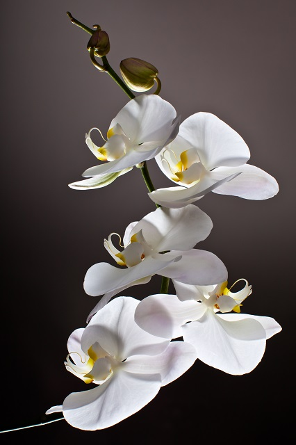 flowers 319