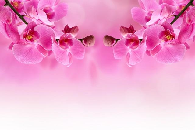 flowers 324