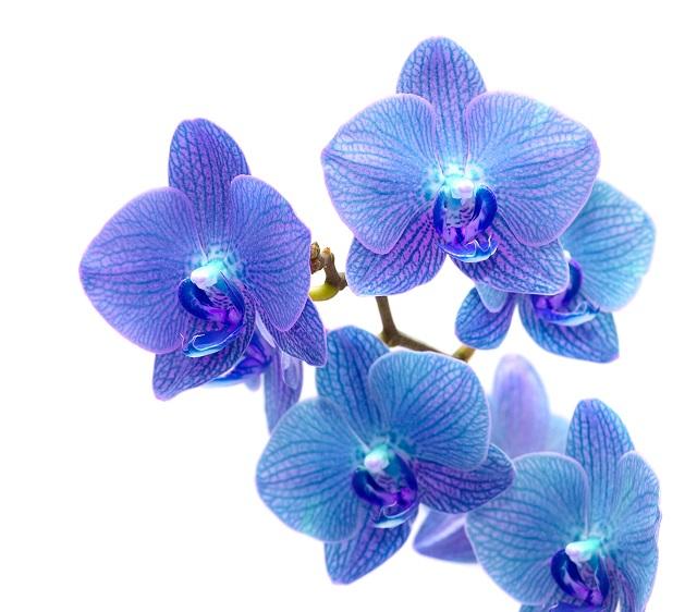 flowers 326