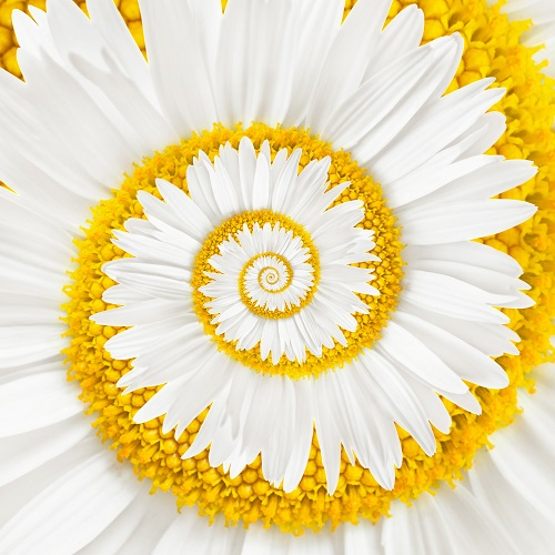 flowers 328