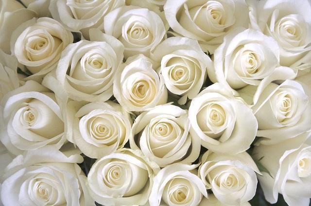 flowers 335
