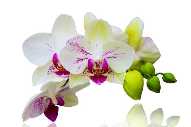 flowers 338