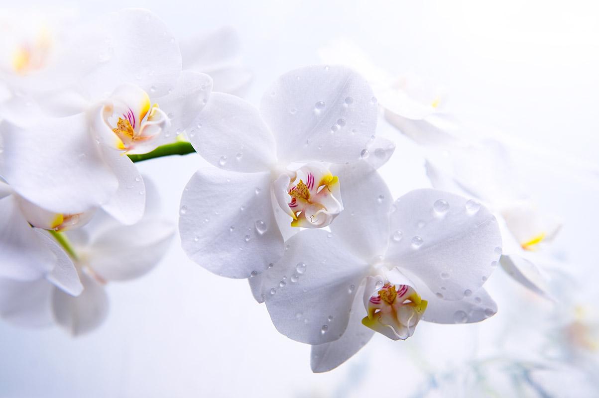 flowers 346