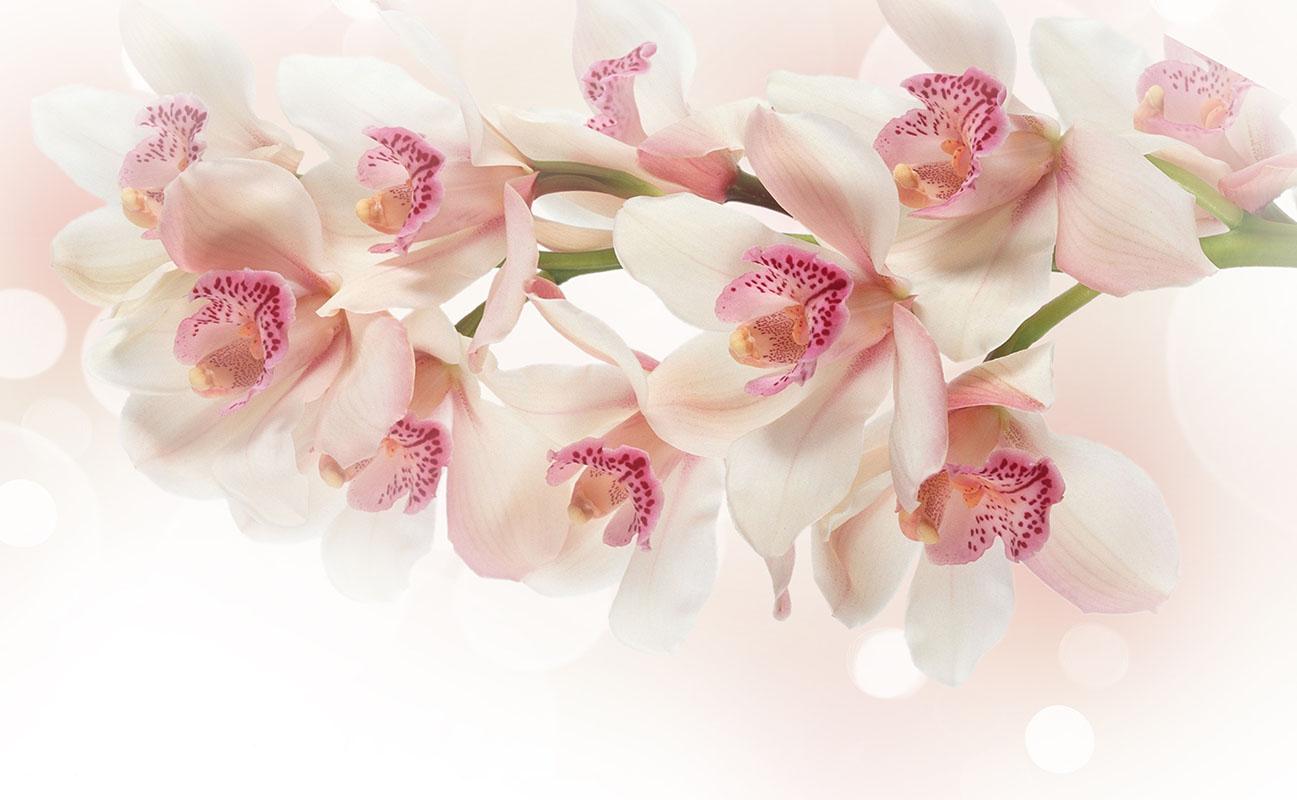 flowers 347